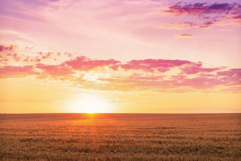 Paisagem rural bonita de um alvorecer brilhante sobre um campo de trigo fotografia de stock