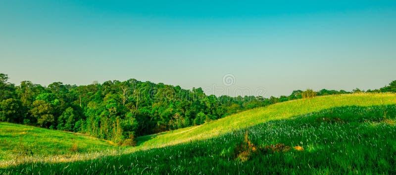 Paisagem rural bonita do campo de grama verde com as flores brancas no fundo claro do céu azul na manhã no dia da luz do sol foto de stock