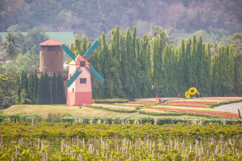A paisagem rural bonita do verão com moinhos de vento e as cabanas da torre na uva verde colocam imagens de stock royalty free