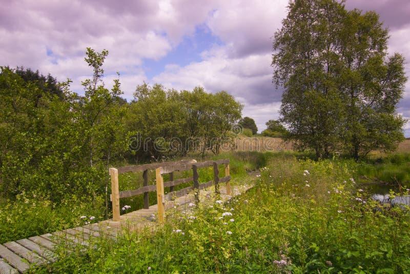 Paisagem rural bonita no verão imagem de stock royalty free