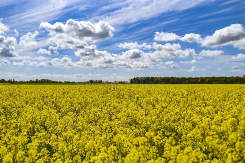 Paisagem rural, campo da violação em um fundo do céu azul fotografia de stock royalty free