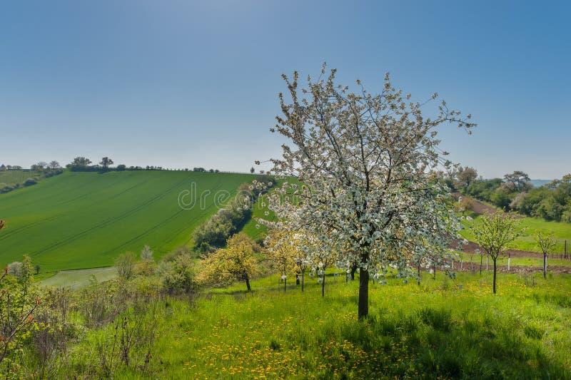 Paisagem rural com árvores fotografia de stock royalty free