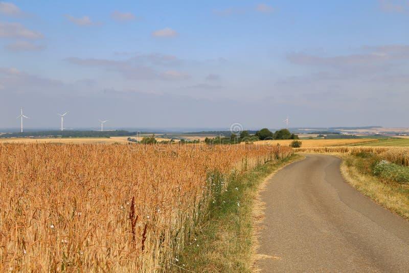 Paisagem rural com campos amarelos do trigo maduro fotos de stock