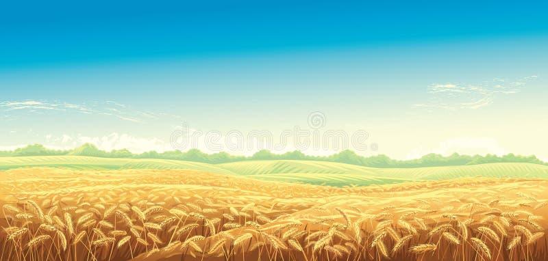 Paisagem rural com campos de trigo ilustração royalty free