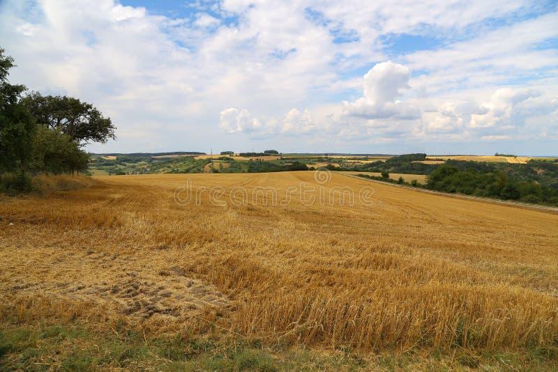 Paisagem rural Paisagem rural com campos de trigo cancelados foto de stock