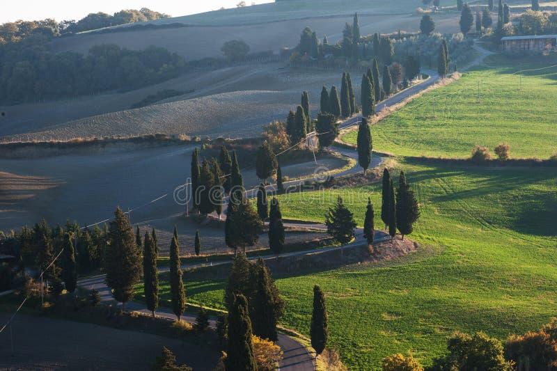 Paisagem rural com Cypress imagem de stock