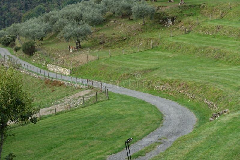 Paisagem rural com estrada e azeitonas em Toscânia norte, Itália, Eu imagens de stock
