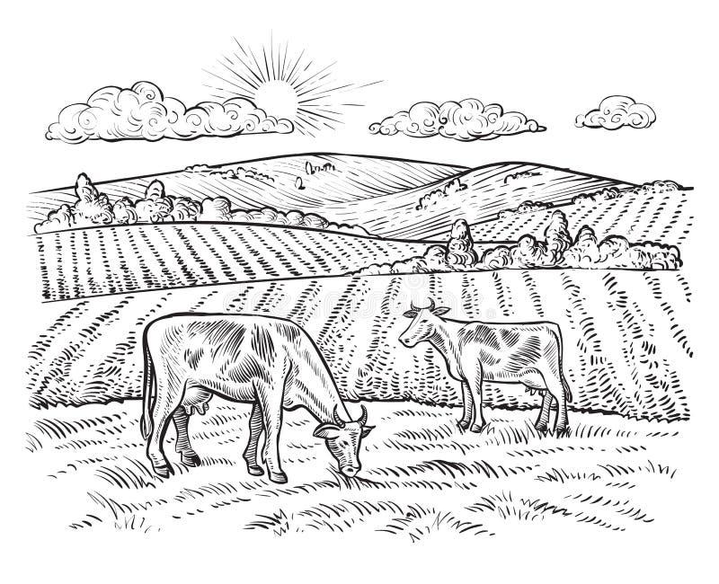 Paisagem rural com vacas Exploração agrícola do vintage do vetor ilustração royalty free