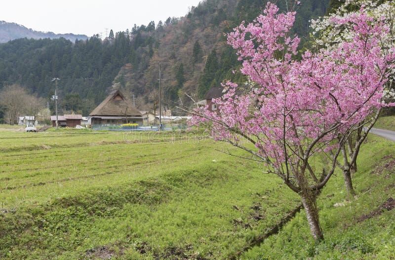 Paisagem rural de Kyoto, Japão imagens de stock royalty free