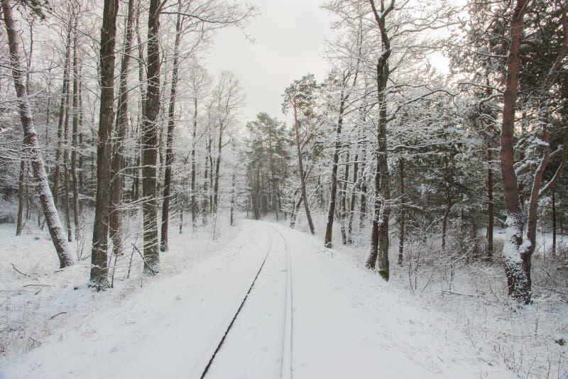 Paisagem rural do campo letão Estrada de ferro do inverno através dos pinhos nevado fotos de stock royalty free