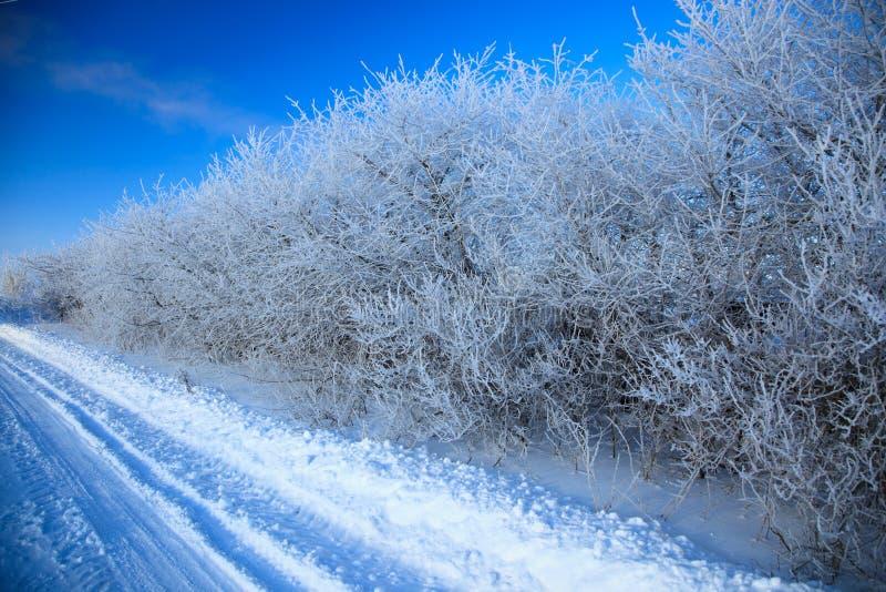 Paisagem rural do inverno. fotos de stock
