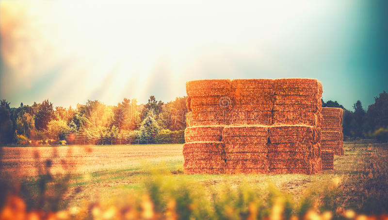 Paisagem rural do país do fim do verão com os pacotes do monte de feno ou da palha do trigo no campo, exploração agrícola da agri imagens de stock