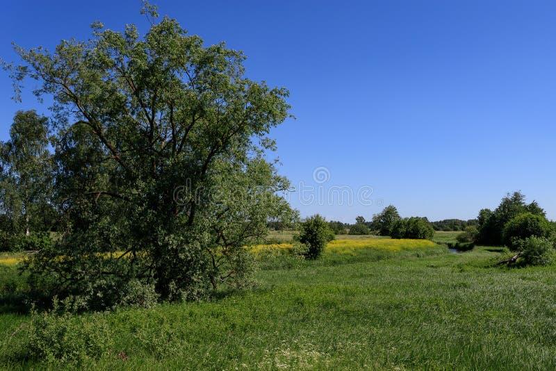 Paisagem rural do verão ensolarado com rio, campos, árvores e o céu azul foto de stock royalty free