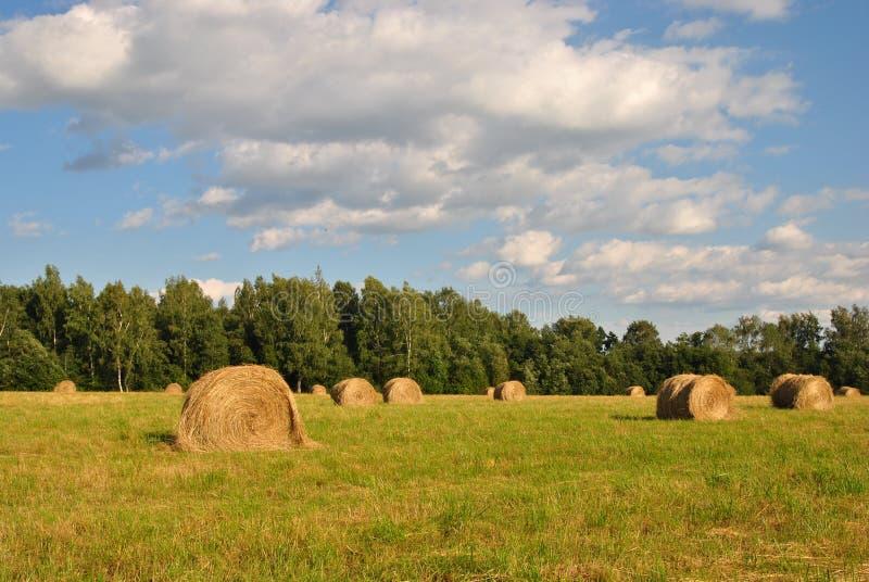 Paisagem rural do verão: monte de feno em um campo imagem de stock