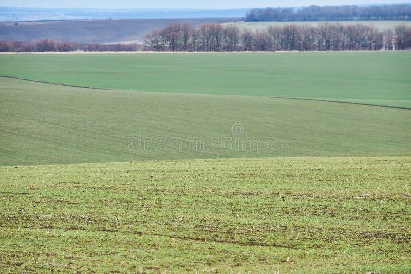 Paisagem rural E Mola em Ucr?nia imagem de stock royalty free