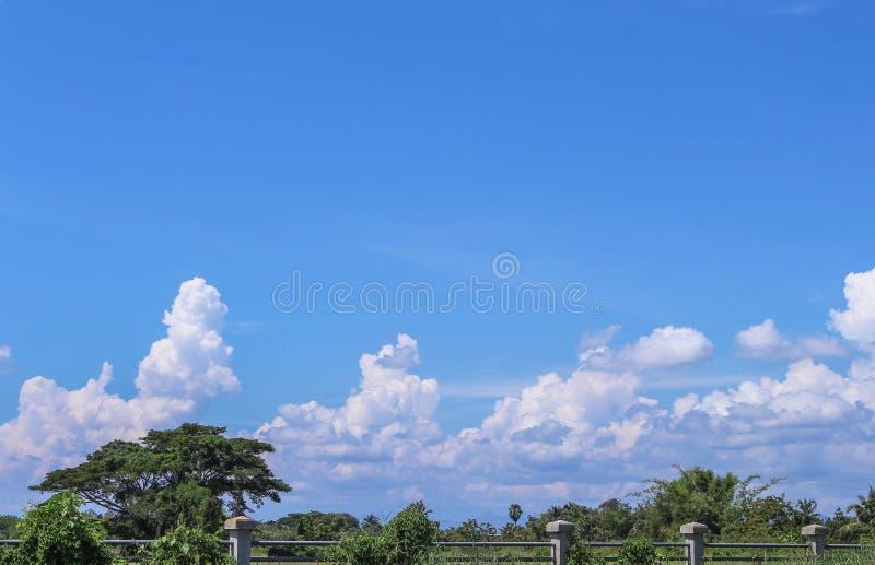 Paisagem rural em Tailândia, em árvores e em nuvens no fundo vívido do céu azul fotografia de stock