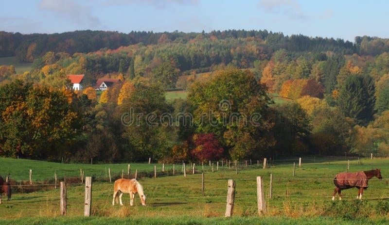 Paisagem rural em Westphalia, Alemanha fotografia de stock royalty free