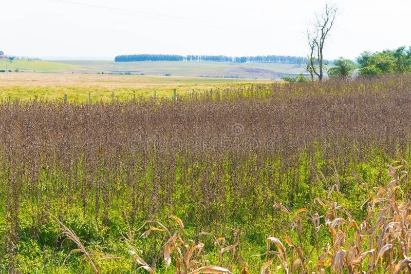 Paisagem rural na exploração agrícola em Brasil 03 foto de stock royalty free