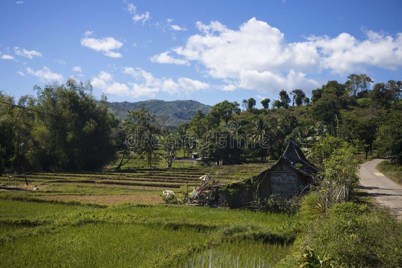 Paisagem rural tropical com a cabana rústica simples Paisagem da montanha com campos do arroz do terraço imagem de stock