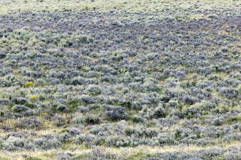 Paisagem semi árida do campo no sudoeste Wyoming imagem de stock royalty free