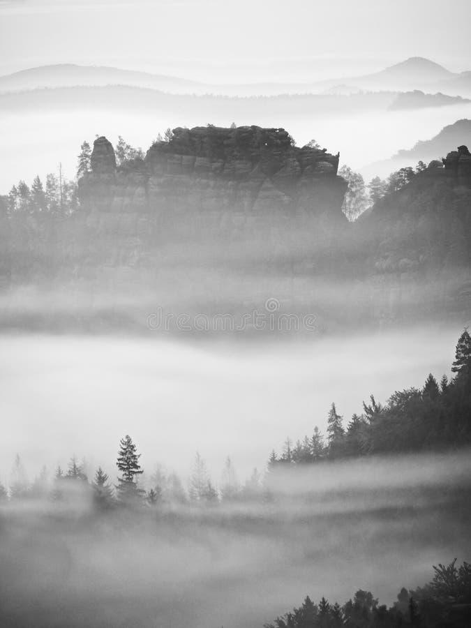 Paisagem sonhadora perdida na névoa grossa Manhã fantástica que incandesce pela luz solar delicada, vale nevoento fotografia de stock