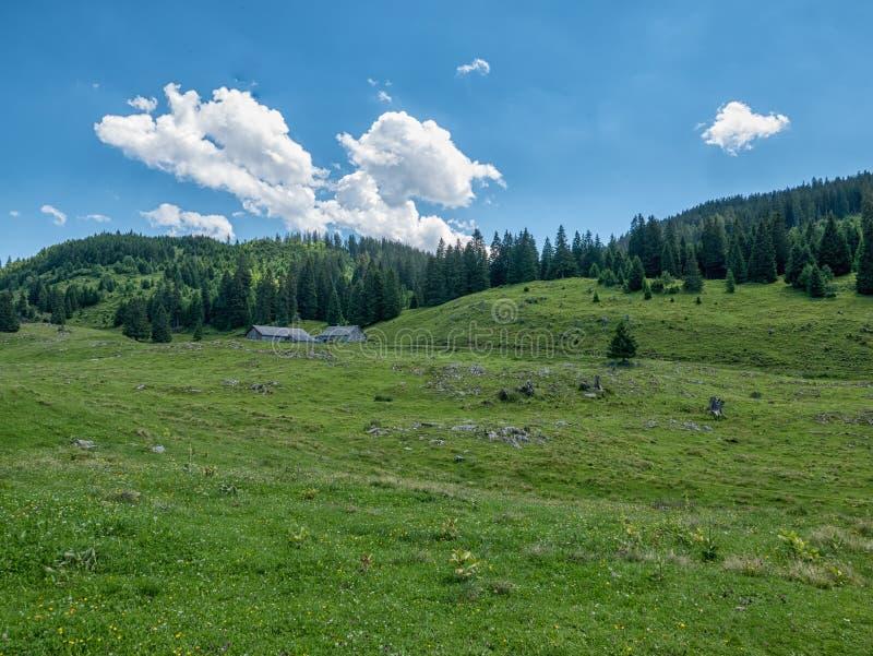 Paisagem suíça - montanhas e floresta em Suíça fotos de stock