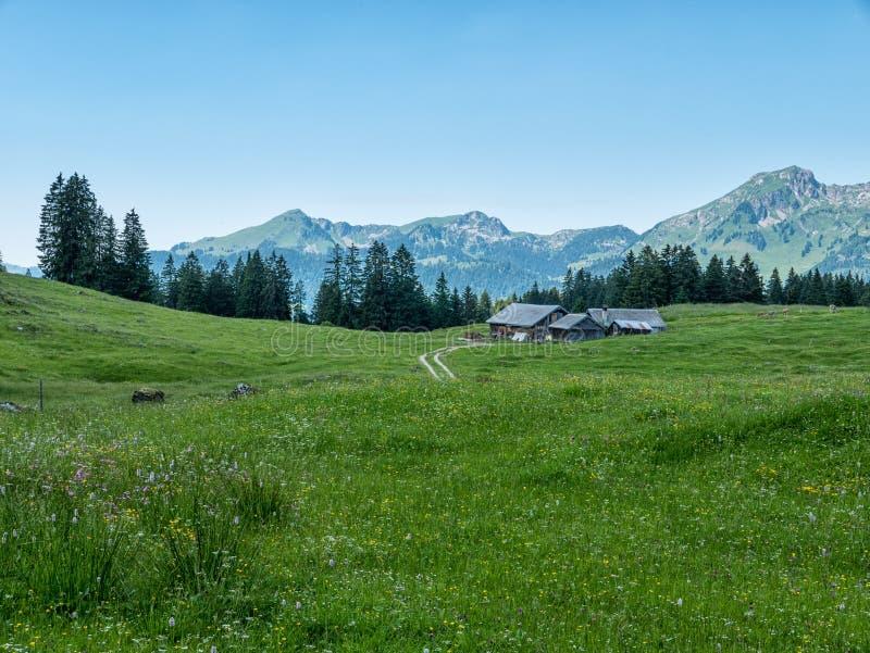 Paisagem suíça - montanhas e floresta em Suíça fotografia de stock
