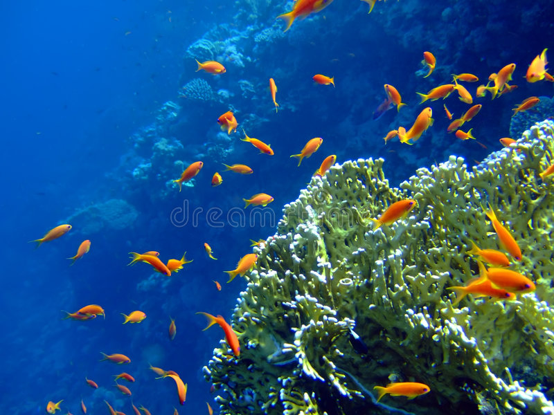 Paisagem subaquática