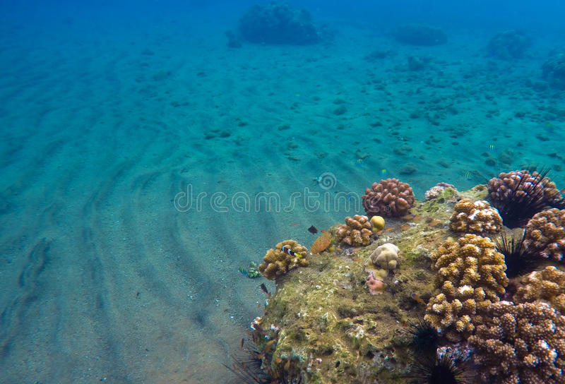 Paisagem subaquática com areia e recife de corais Agua potável azul do mar tropical foto de stock