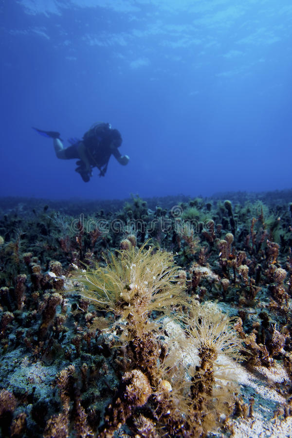 Paisagem subaquática com mergulhador fotografia de stock royalty free