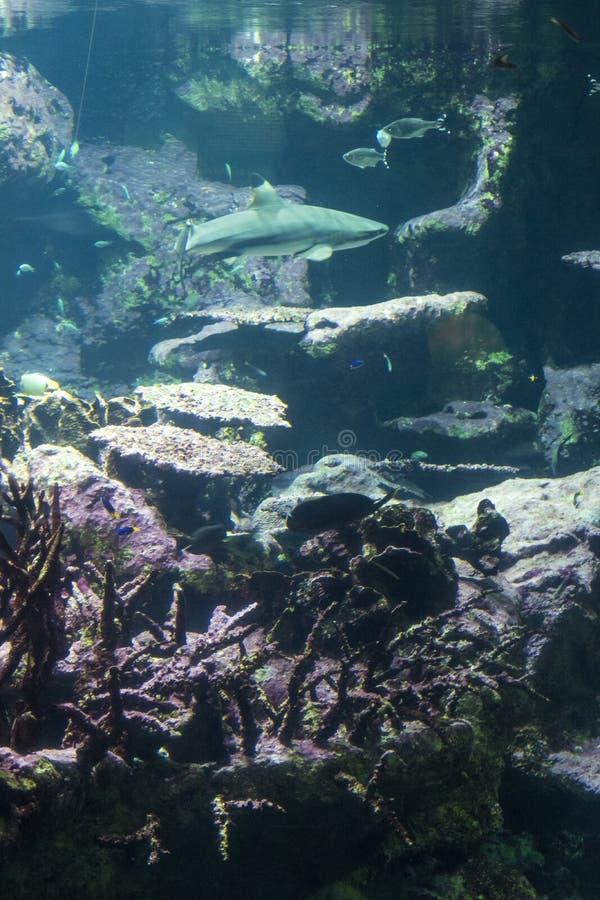 Paisagem subaquática com recife de corais e peixes fotografia de stock