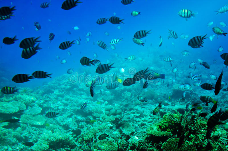 Paisagem subaquática do Mar Vermelho. fotos de stock royalty free