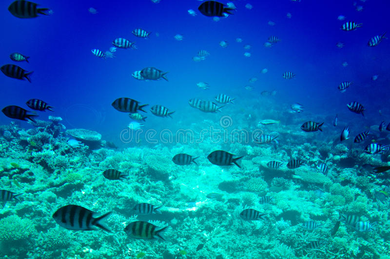 Paisagem subaquática do Mar Vermelho. fotografia de stock royalty free
