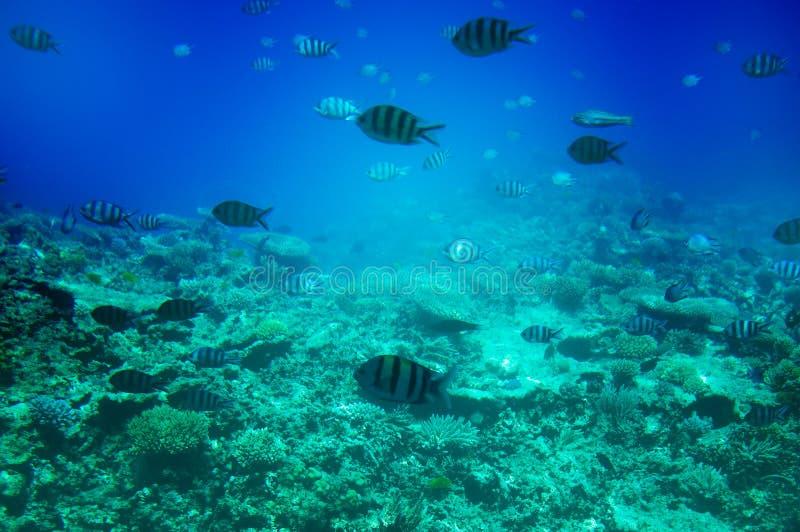 Paisagem subaquática do Mar Vermelho. fotos de stock
