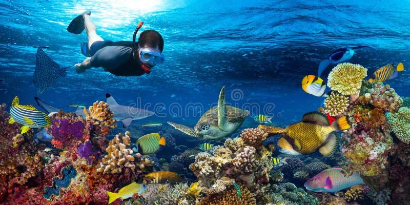 Paisagem subaquática do recife de corais que snorkling imagem de stock