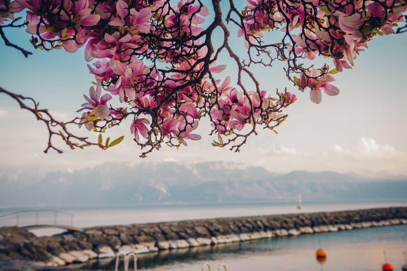 Paisagem surpreendente da mola do lago suíço Genebra fotografia de stock royalty free