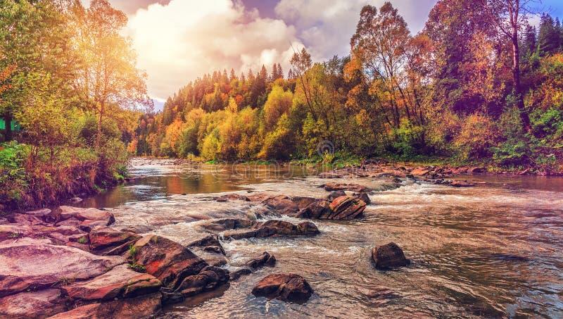 Paisagem surpreendente do outono árvores coloridas sobre o rio da montanha na floresta que cobre no sinlight imagens de stock