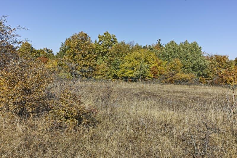 Paisagem surpreendente do outono da montanha de Cherna Gora Monte Negro, Bulg?ria imagem de stock