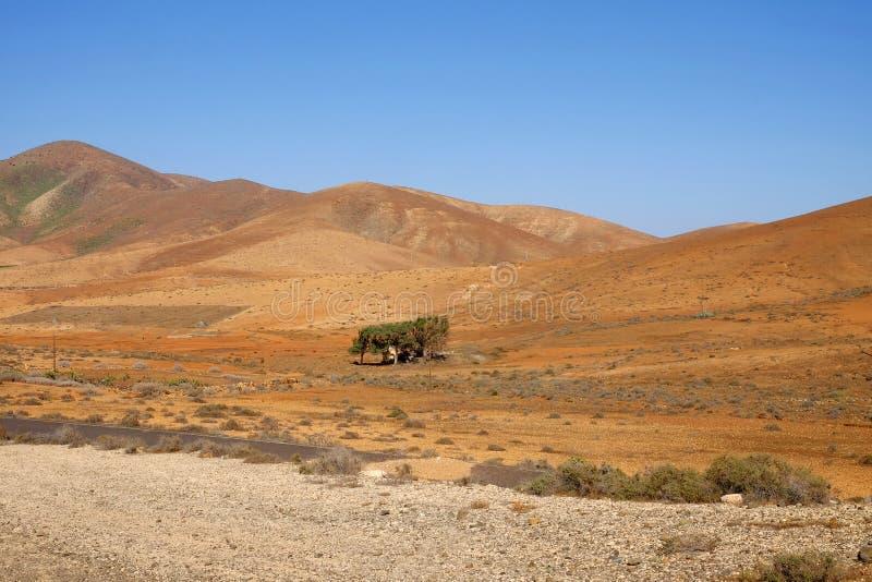 Paisagem típica com as montanhas vulcânicas vermelhas nas Ilhas Canárias Fuerteventura, Espanha fotografia de stock royalty free