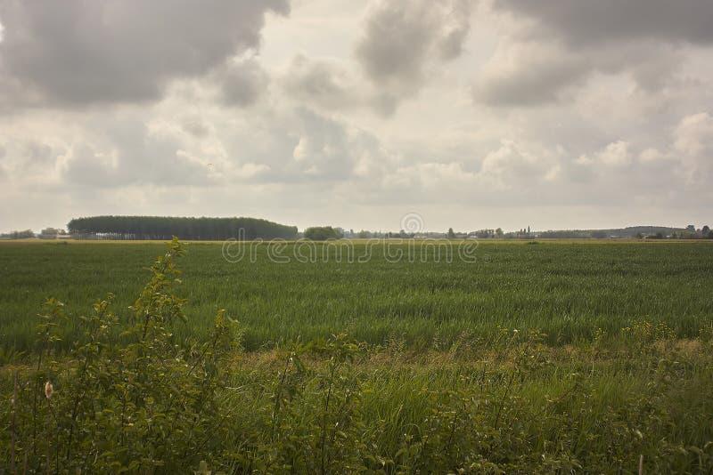 Paisagem típica do campo da planície de Padana em Vêneto imagens de stock