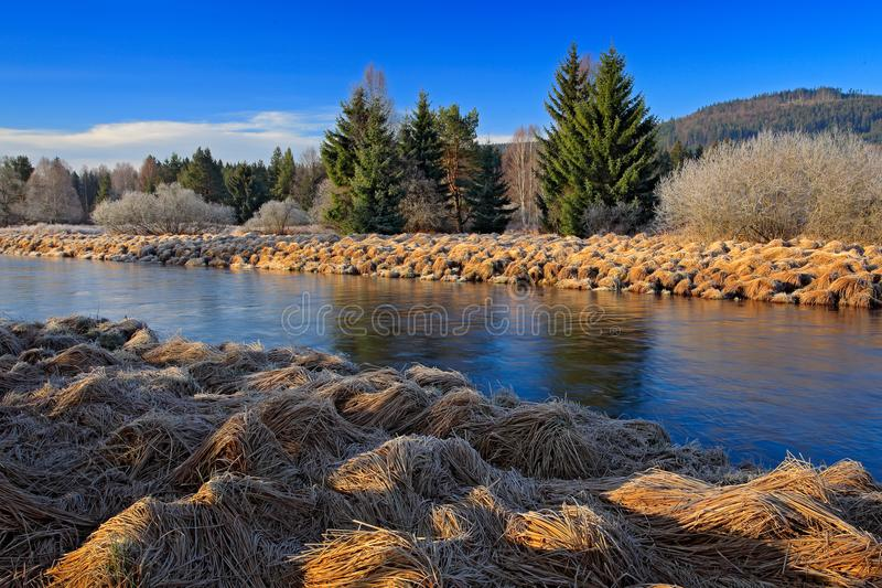 Paisagem típica em torno do rio de Vltava, parque nacional de Sumava em República Checa Floresta verde com meandro do rio Sagacid foto de stock royalty free