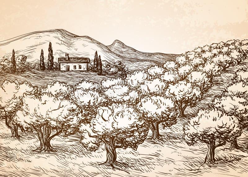 Paisagem tirada mão do bosque verde-oliva ilustração do vetor