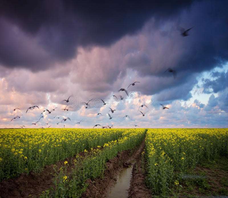 Paisagem tormentoso do verão fotos de stock