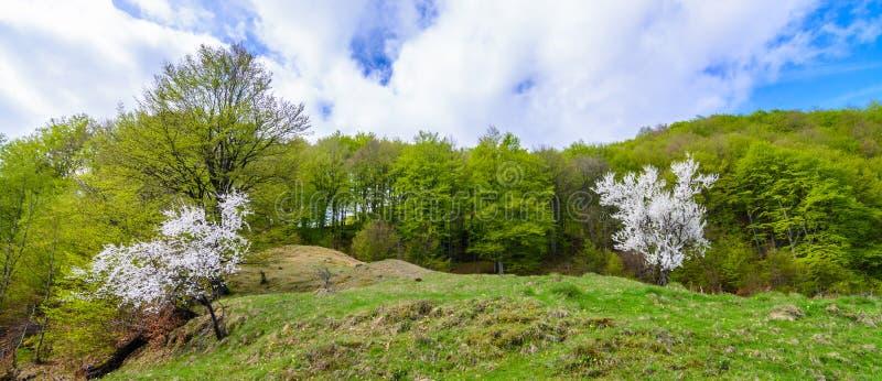 Paisagem tradicional dos montes verdes sobre o céu nebuloso no fundo Paraíso dos caminhantes no campo Romênia imagem de stock