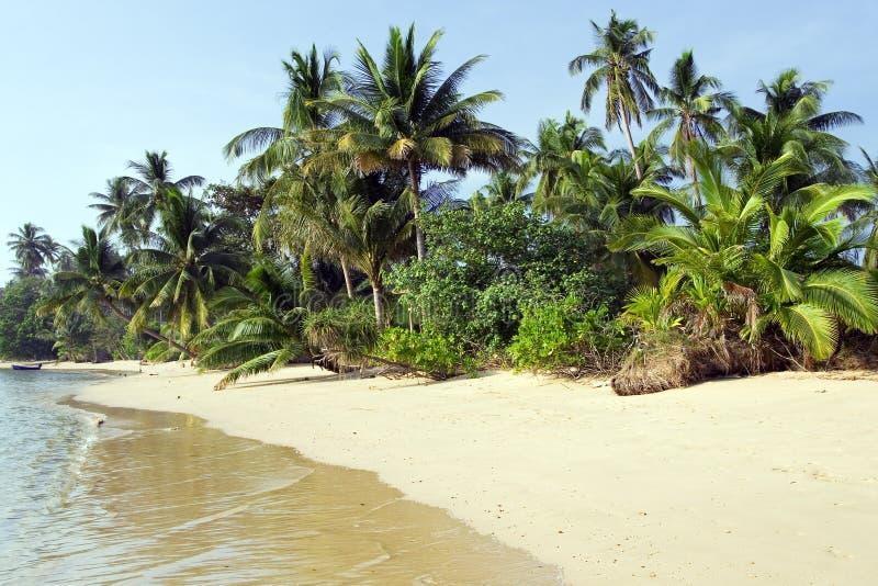 Paisagem tropical foto de stock royalty free