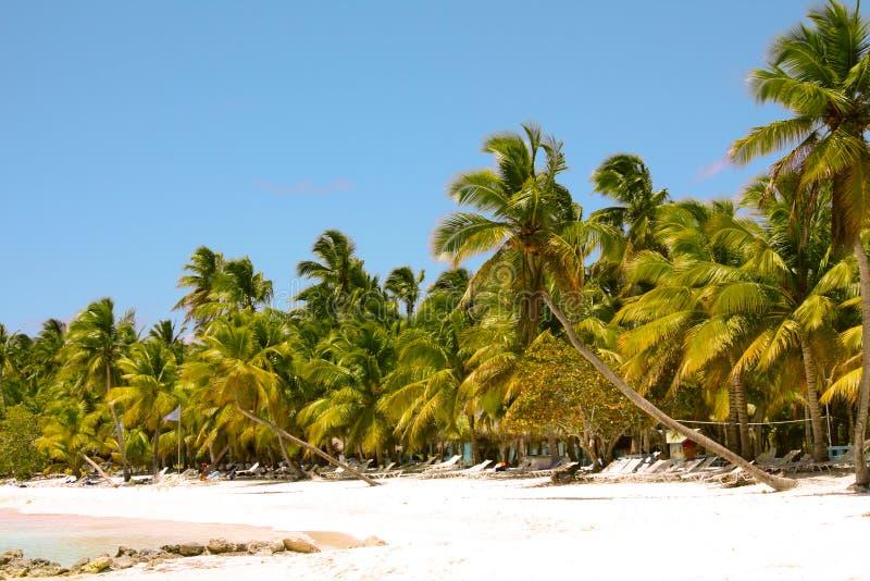 Paisagem tropical bonita fotografia de stock royalty free