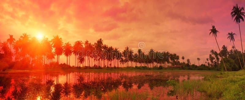 Paisagem tropical colorida com referência crepuscular do céu e das palmeiras imagem de stock