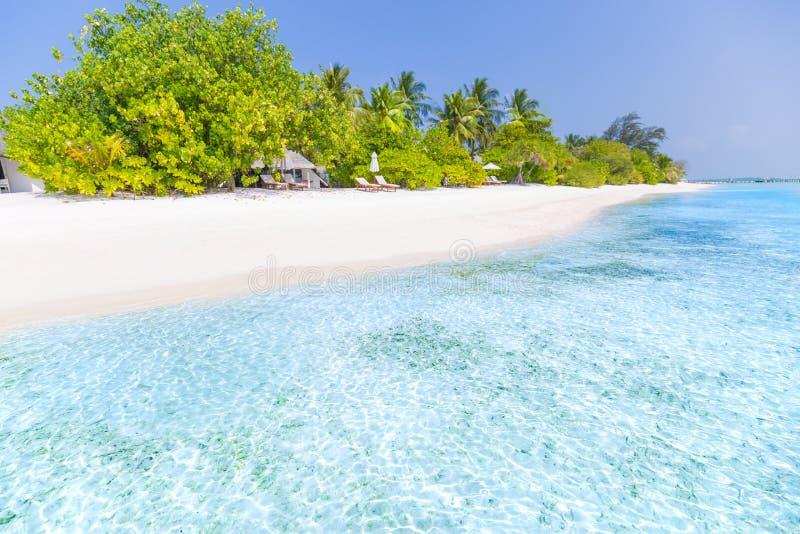 Paisagem tropical da praia Mar e palmeiras azuis bonitas e céu azul Bandeira tropical da natureza fotografia de stock royalty free