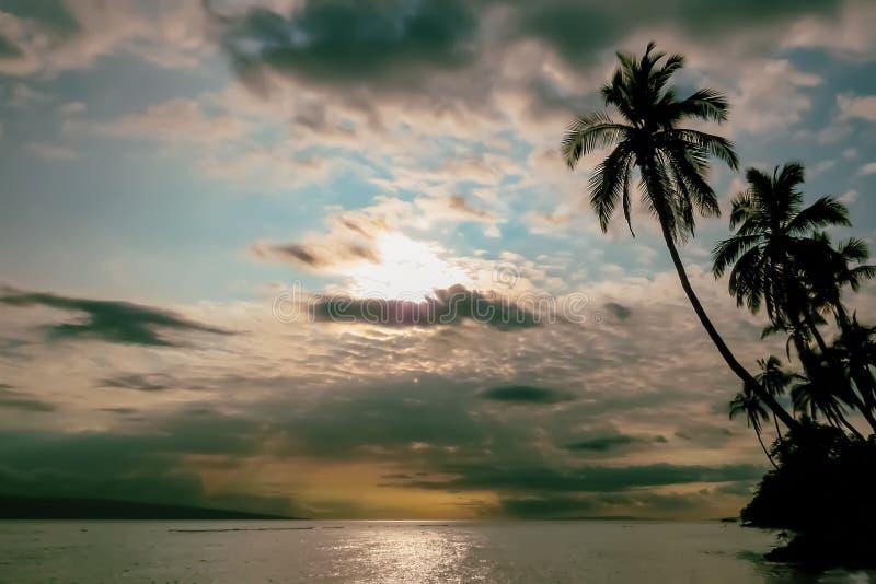 Paisagem tropical, por do sol sobre o oceano, silhuetas das palmeiras, Havaí, EUA imagem de stock royalty free