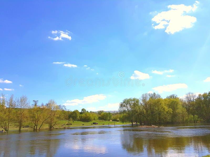 Paisagem Uma lagoa em torno de que as árvores crescem, grama verde Céu azul com nuvens imagens de stock royalty free